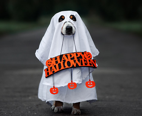 dog dressed as a ghost
